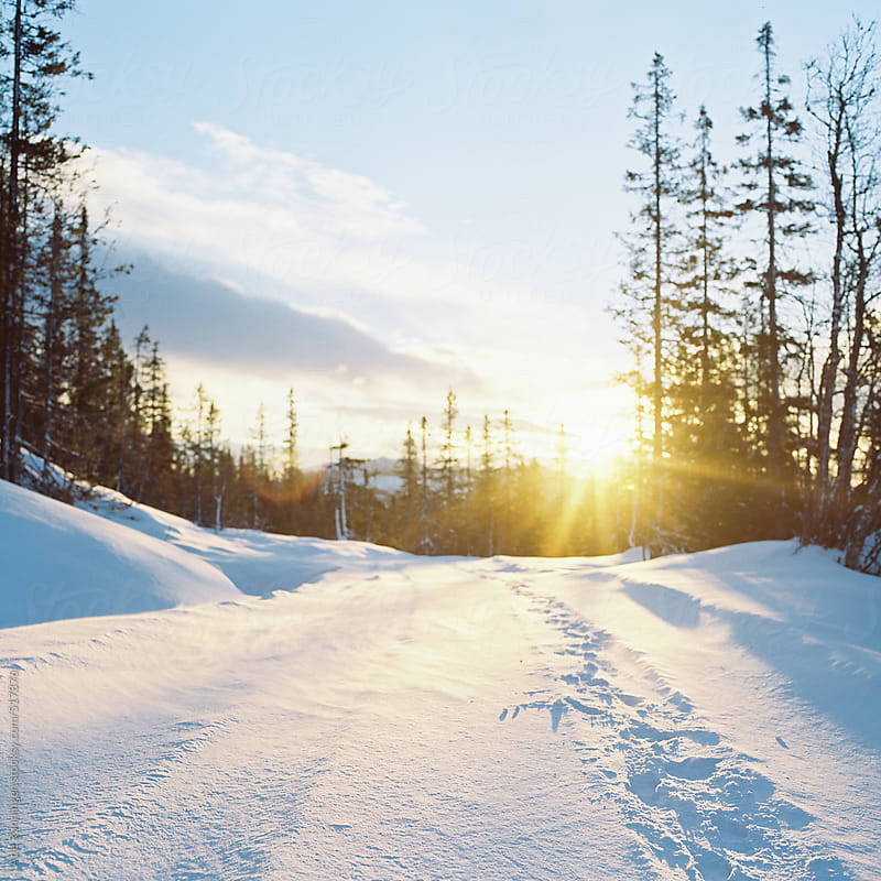 Tracks in the newly felled snow with sun shining trough the trees by Atle Rønningen for Stocksy United