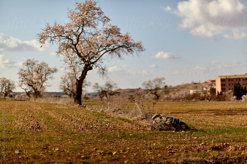 labor camps with tree waiting for spring by Javier Pardina for Stocksy United