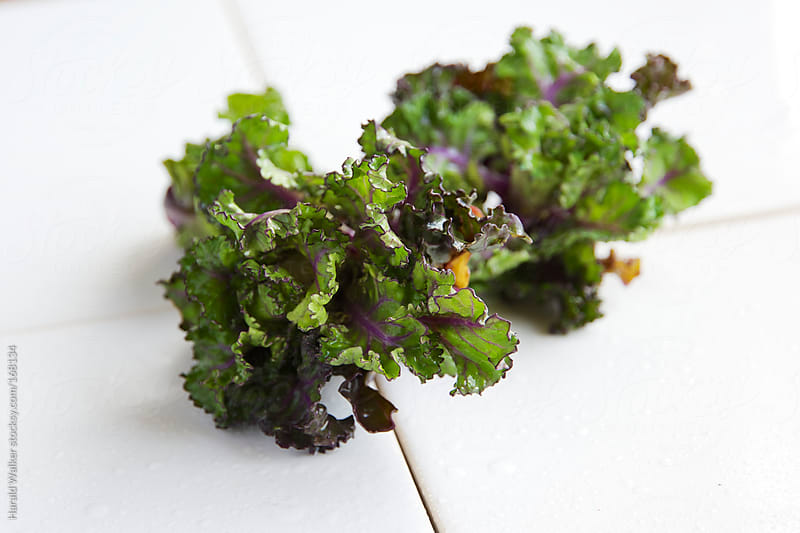 Washed Kale-Sprouts by Harald Walker for Stocksy United