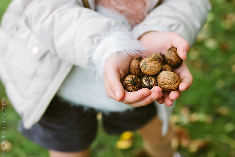 A child's hands full of foraged walnuts by Helen Rushbrook for Stocksy United
