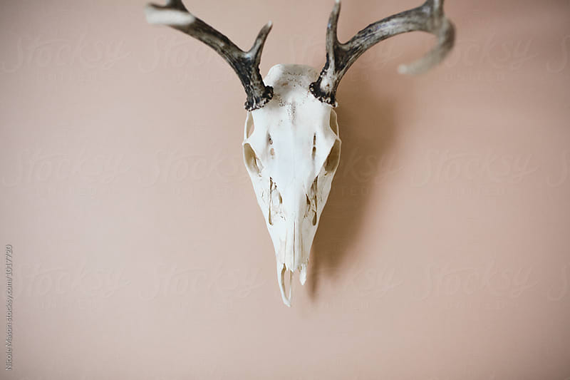 deer skull with antlers on light pastel background by Nicole Mason for Stocksy United