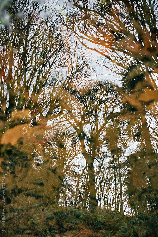 Vertical view of reflection of trees in a puddle of water by Mihael Blikshteyn for Stocksy United