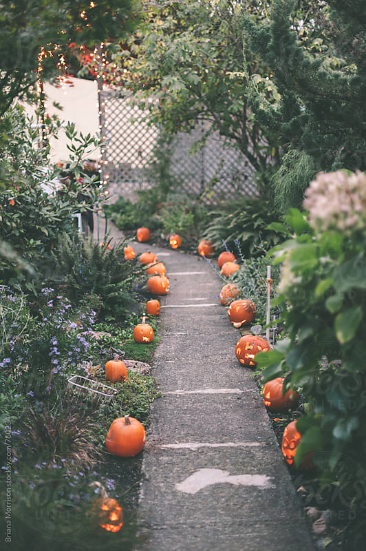 Path of Jack-O-Lanterns for Halloween by Briana Morrison for Stocksy United