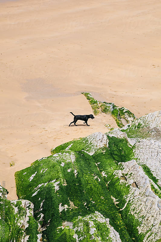 Black Dog Playing at the Beach by VICTOR TORRES for Stocksy United
