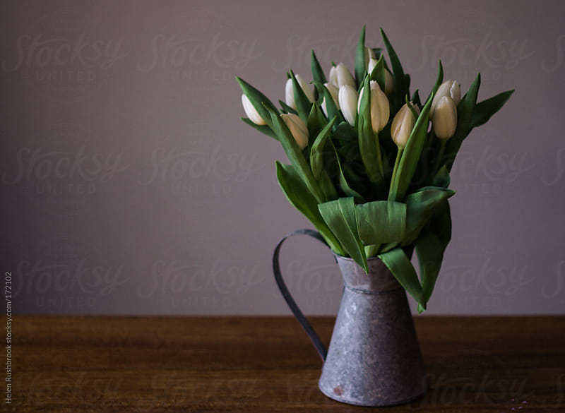 White tulips in a galvanised jug by Helen Rushbrook for Stocksy United