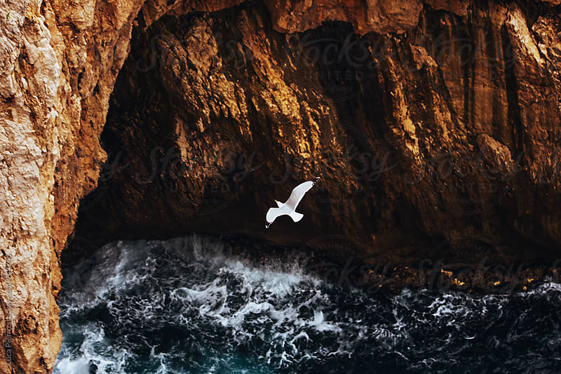 Seagull flying over a cliff by Luca Pierro for Stocksy United