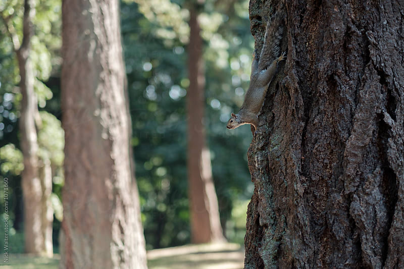 Cute Squirrel by Nick Walter for Stocksy United
