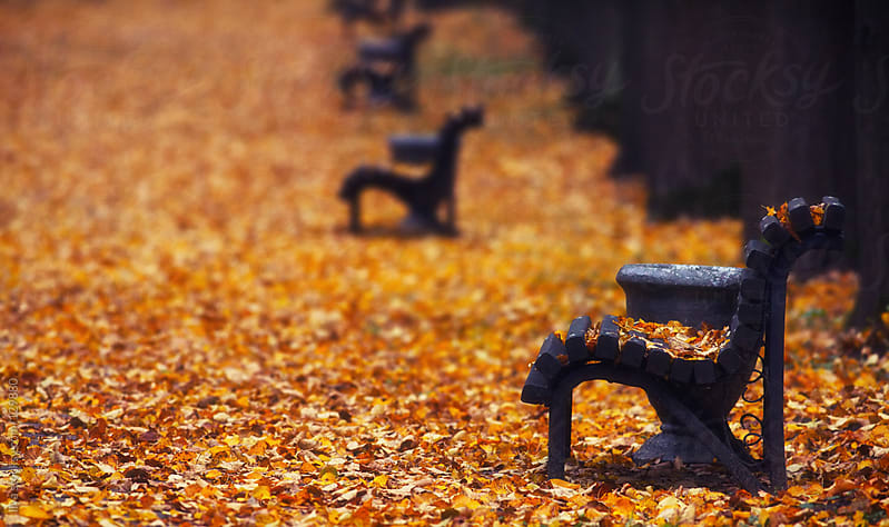 Benches in autumn park in a row by Ilya for Stocksy United
