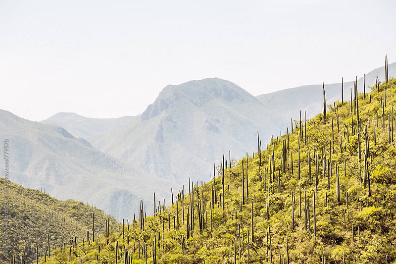 Mountains and cactus landscape in Oaxaca, Mexico by Alejandro Moreno de Carlos for Stocksy United