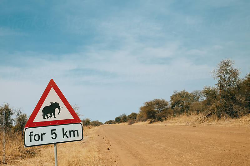 Yield for Elephants sign post by Micky Wiswedel for Stocksy United