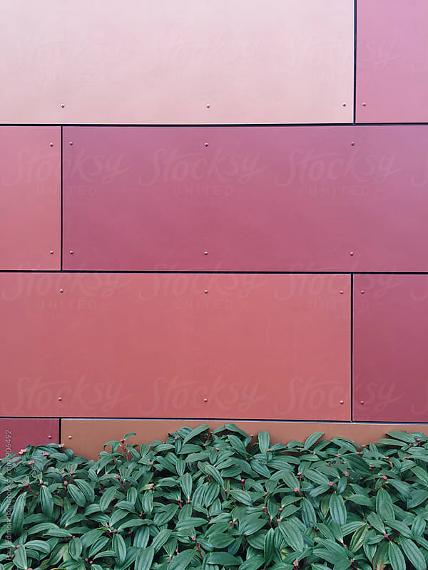 Exterior of modern building wall and green hedge  by Paul Edmondson for Stocksy United