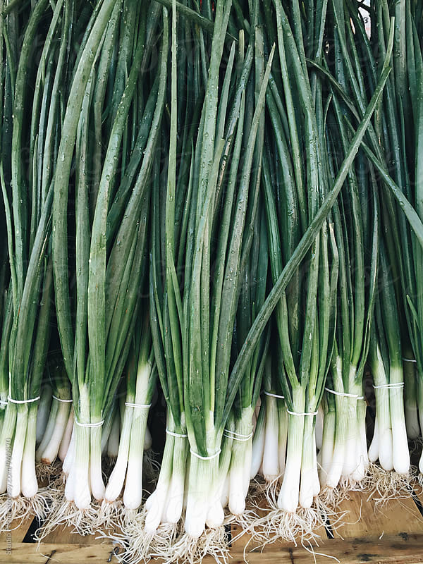 Spring Onion  by Studio Firma for Stocksy United
