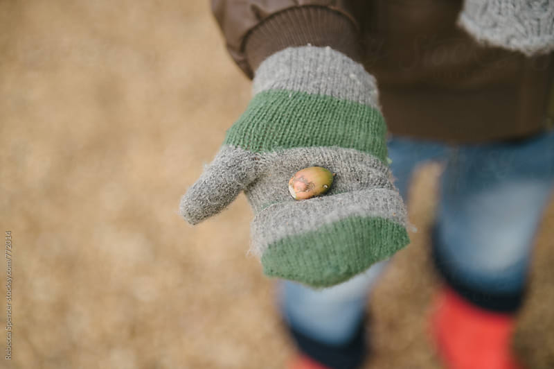 Child's gloved hand holding acorn by Rebecca Spencer for Stocksy United