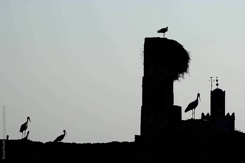 White Storks perched on the wall of the El Badi Palace, Marrakech by Bisual Studio for Stocksy United