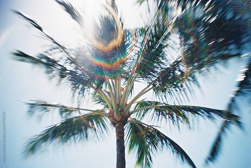 Rainbow flare on Palm Tree by wendy laurel for Stocksy United