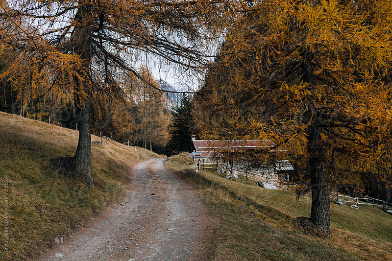 Dirt road in the mountains in autumn by Davide Illini for Stocksy United