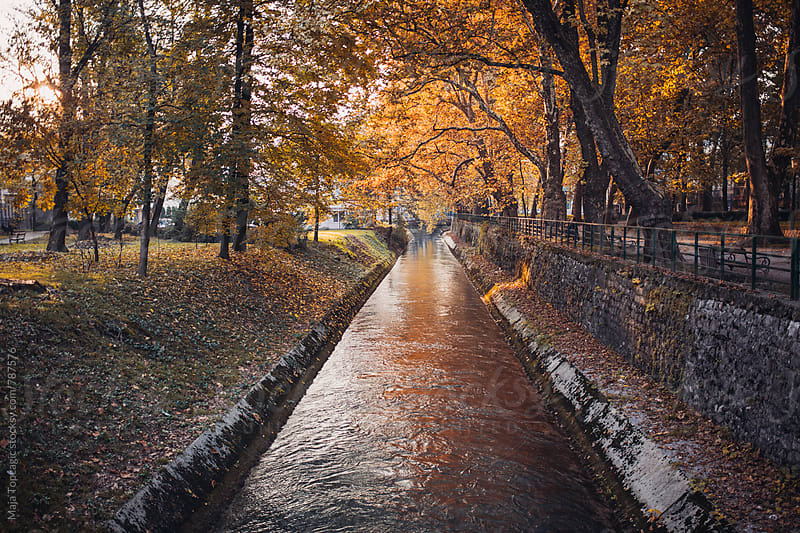 River in the park in autumn by Maja Topcagic for Stocksy United
