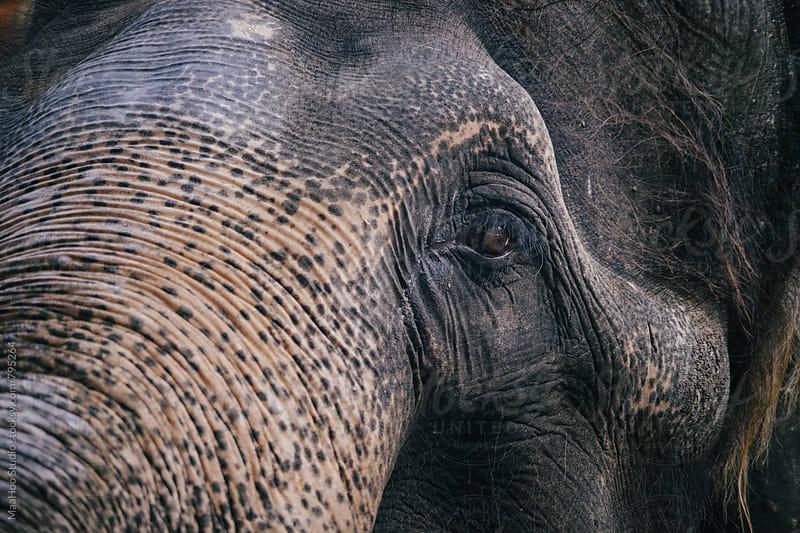 Closeup of elephant eyes by Maa Hoo for Stocksy United
