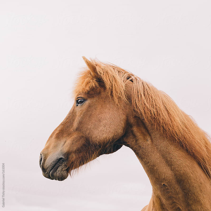 Portrait of a horse by Gabriel Tichy for Stocksy United