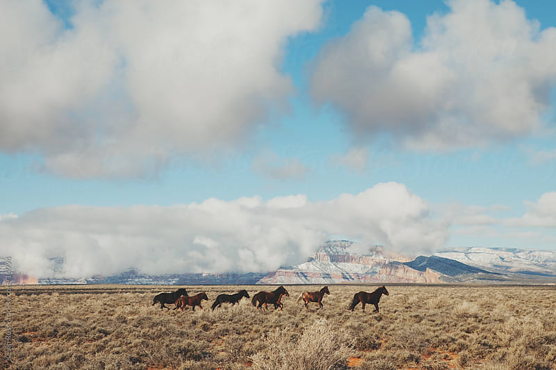 Wild Running Canyon Horses by Kevin Russ for Stocksy United
