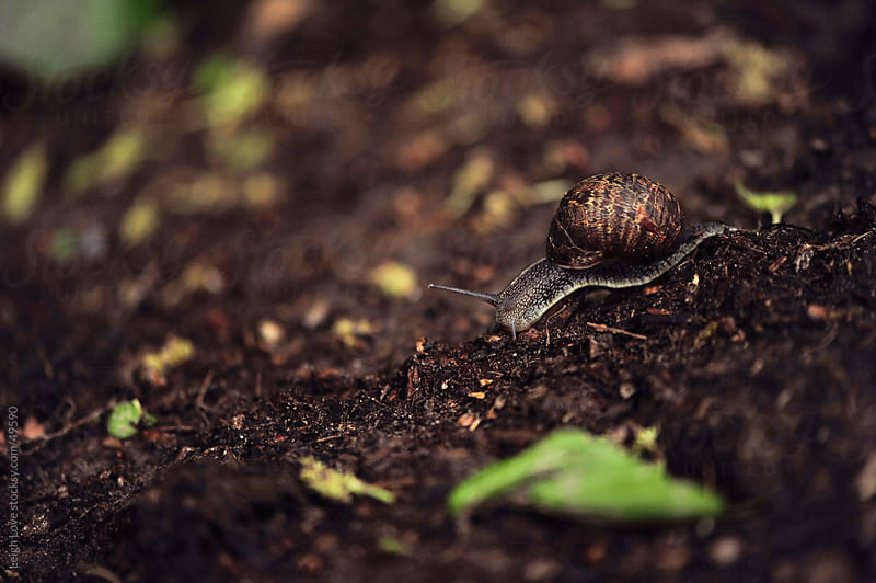 A Snail Makes His Way Across the Dirt by Leigh Love for Stocksy United