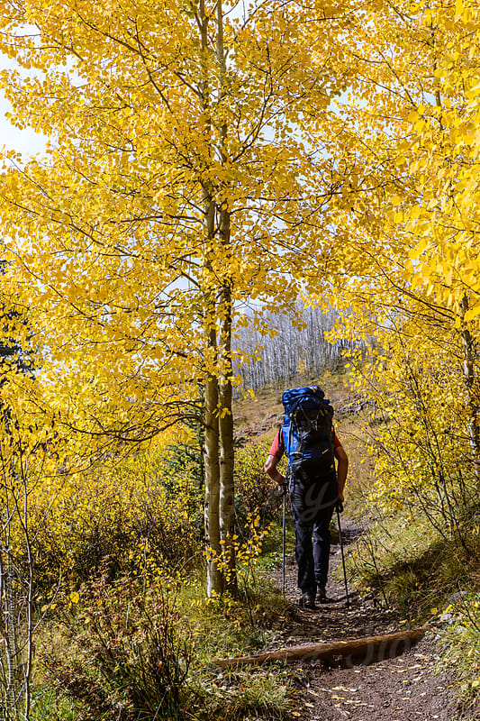Hiker on trail through yellow aspens by Mick Follari for Stocksy United