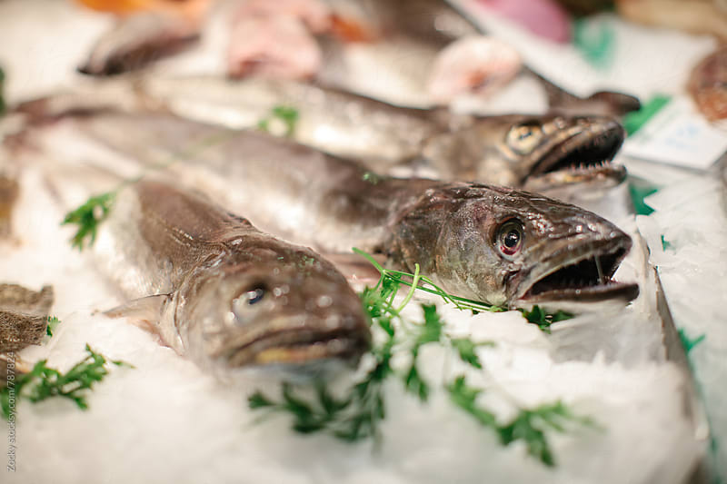 Fresh fish at the market by Zocky for Stocksy United