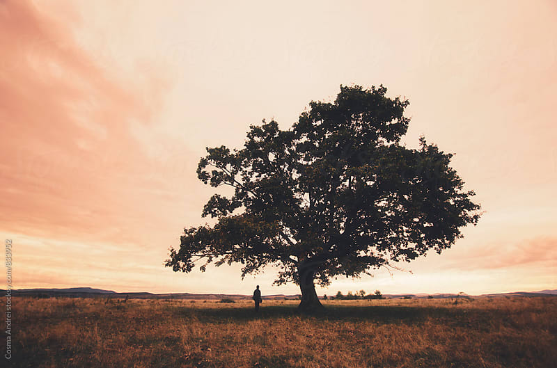 Tree with man at sunset by Cosma Andrei for Stocksy United