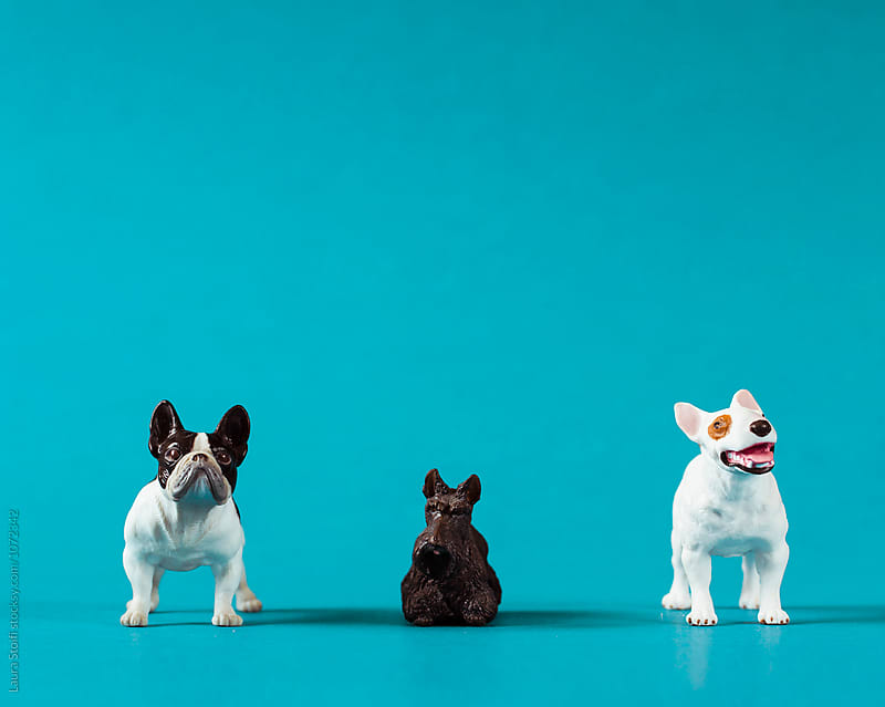 Three funny dog miniatures in a row on marine blue background by Laura Stolfi for Stocksy United
