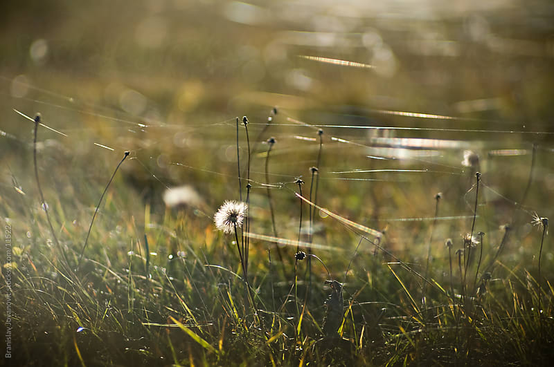 Grass by Brkati Krokodil for Stocksy United