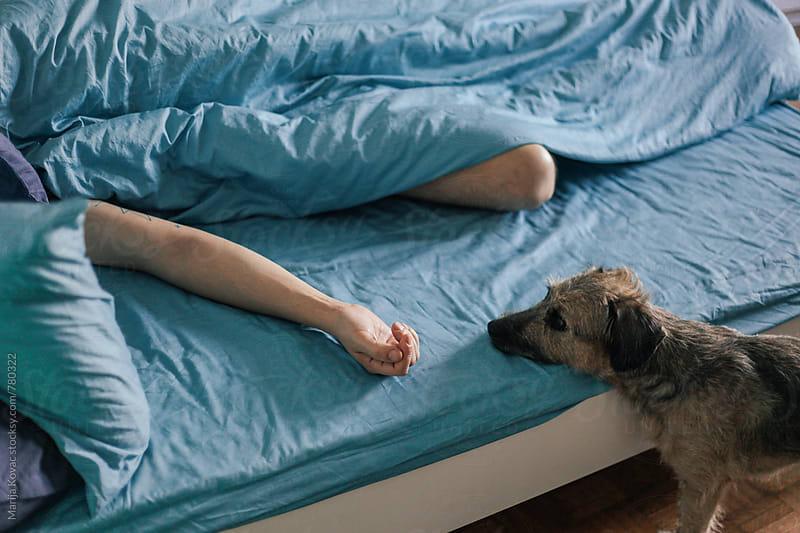 Cute dog standing next to the bed by Marija Kovac for Stocksy United