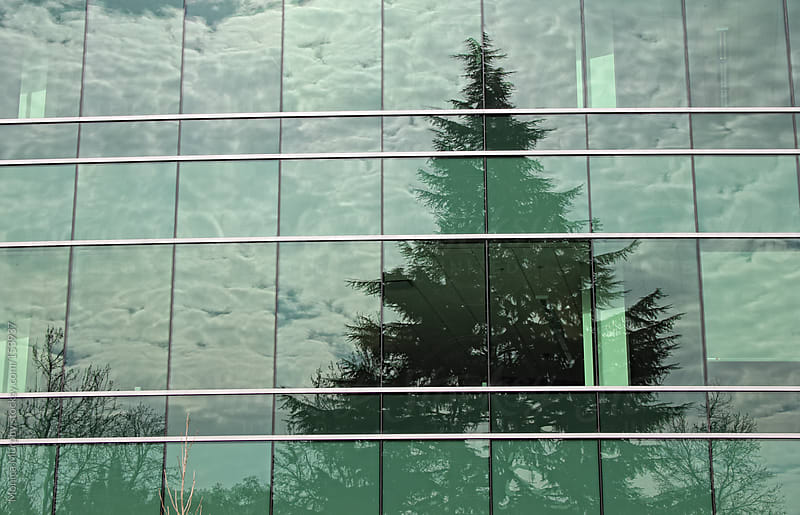 Reflection of an Evergreen tree in green glass office windows by Monica Murphy for Stocksy United