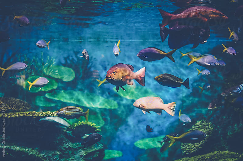 colorful tropical fish by Andreas Gradin for Stocksy United