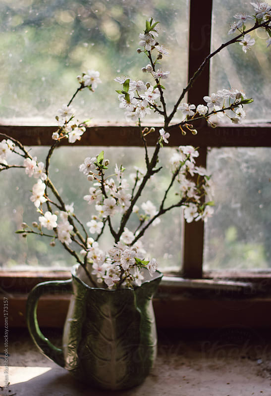 Branches of blossom in a vintage jug by Helen Rushbrook for Stocksy United