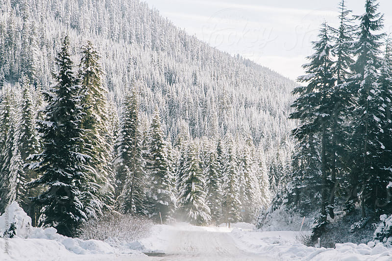 Winter road runs through snow covered forest by Jesse Morrow for Stocksy United