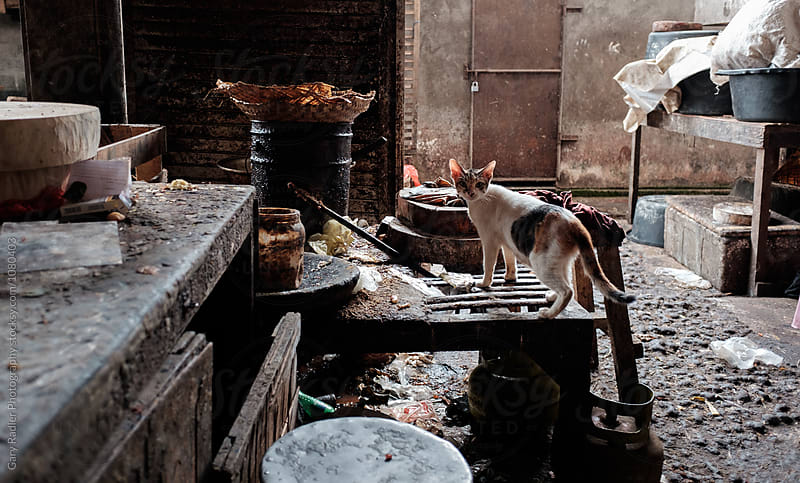 Cat exploring for Food Scraps at Sukawati Market, Bali by Gary Radler Photography for Stocksy United