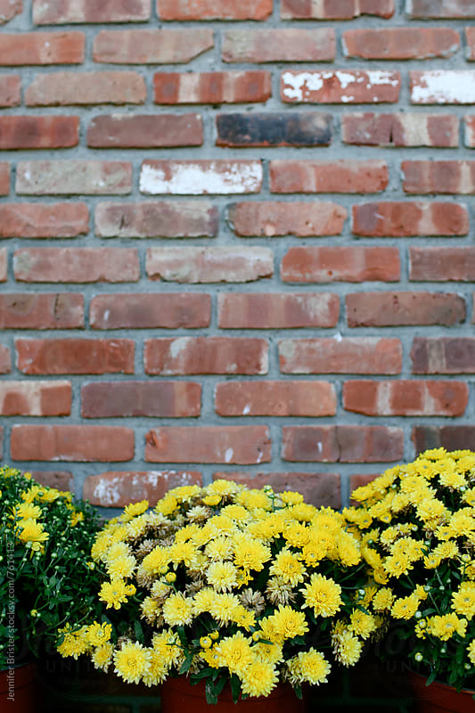 Mums in front of a brick wall  by Jennifer Brister for Stocksy United