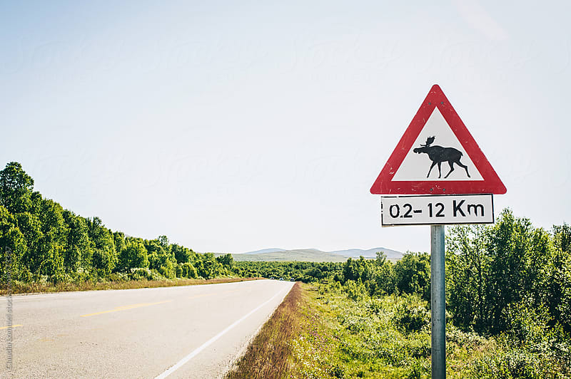 Moose warning sign at a Highway in Norway, Scandinavia by Claudia Lommel for Stocksy United