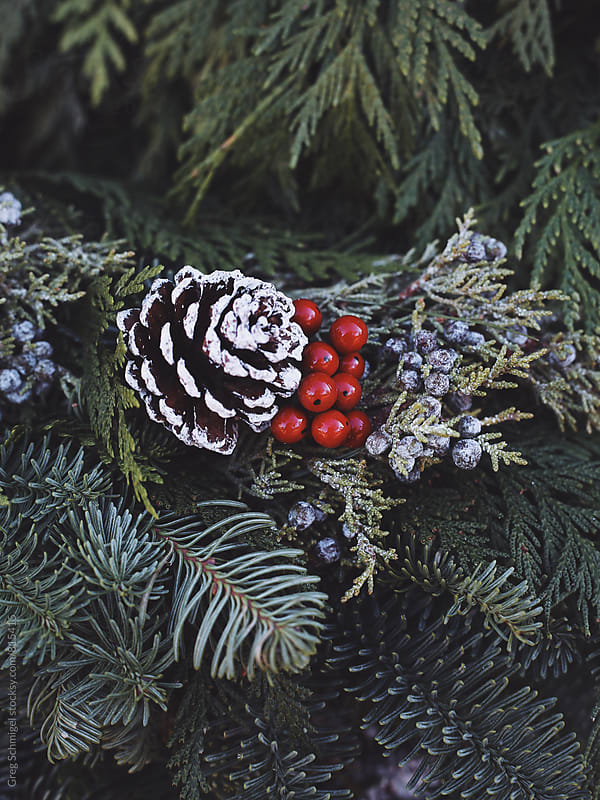 Christmas winter holiday berries and greens with pine cones and natural beauty by Greg Schmigel for Stocksy United
