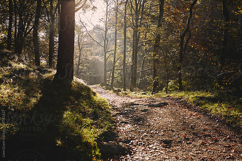 Footpath through sunlit autumnal woodland. Skelwith, Cumbria, UK. by Liam Grant for Stocksy United