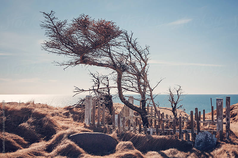 Abandoned graveyard at Marup kirke in Lonstrup, North Jutland by Elisabeth Coelfen for Stocksy United
