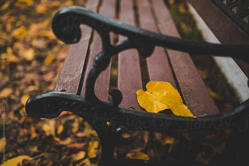 Yellow leaf left all alone on a wooden bench  by Sanja (Lydia) Kulusic for Stocksy United