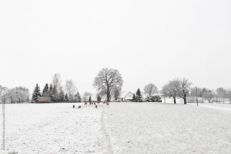 Rural German landscape in winter by Melanie Kintz for Stocksy United