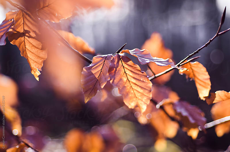 autumn foliage by Canan Czemmel for Stocksy United