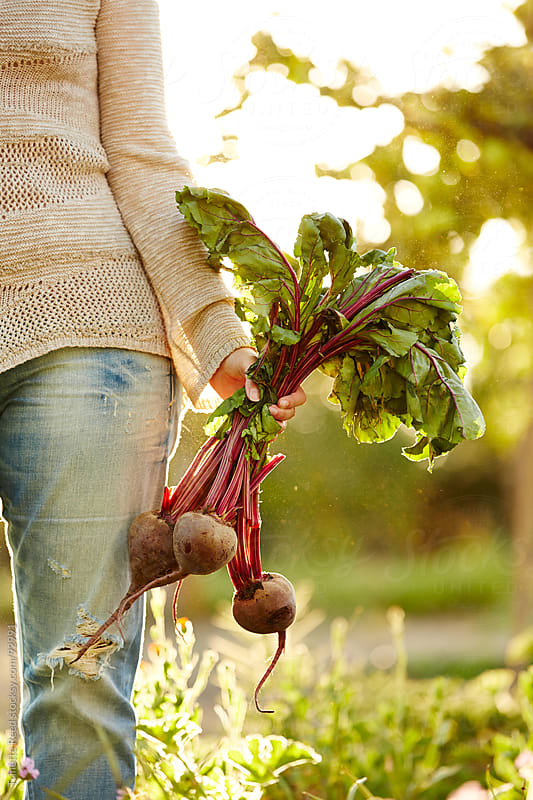 Woman holding beets at organic farm in California by Trinette Reed for Stocksy United