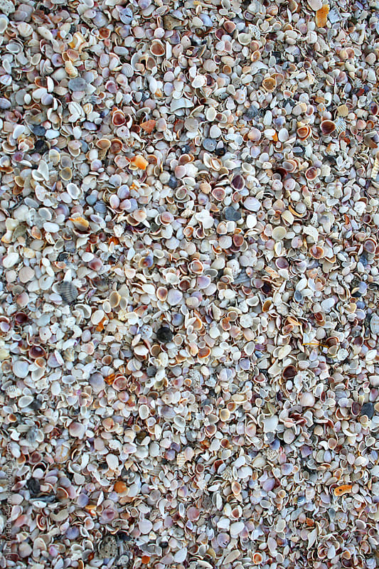 Close Up Of A Beach Made Of Large Amounts Of Small Sea Shells by ALICIA BOCK for Stocksy United