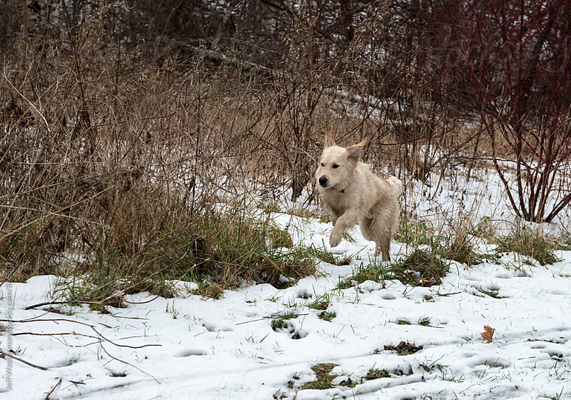 Dog Running in the Woods in Winter by Jeff Wasserman for Stocksy United