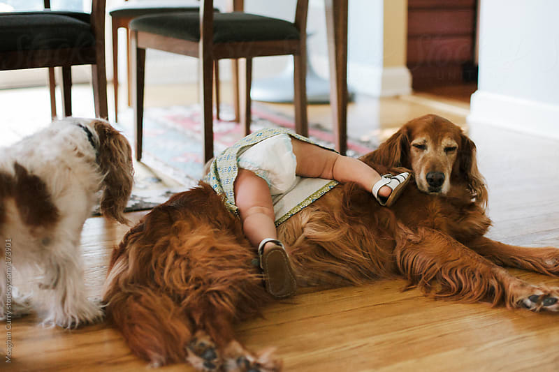 toddler falling over her dogs by Meaghan Curry for Stocksy United