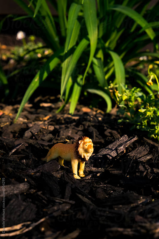 Miniature Plastic Toy Lion in earth and grass by J Danielle Wehunt for Stocksy United