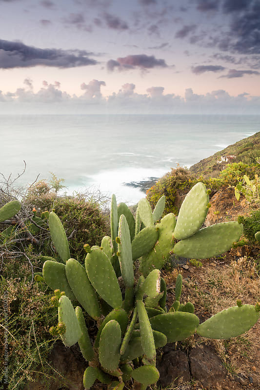 Cactus on a coast at sunset by Marilar Irastorza for Stocksy United